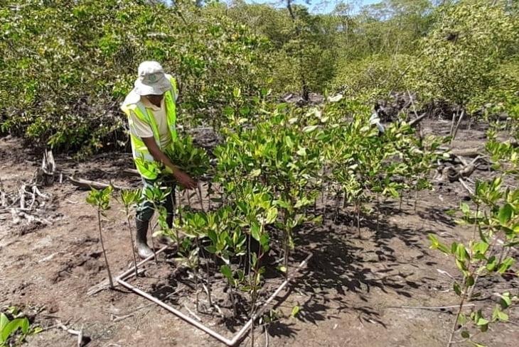 Dia Mundial do Meio Ambiente: Bahia Norte recupera trecho da bacia do Rio Joanes tão importante para o ecossistema
