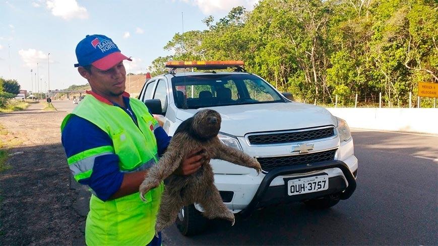 BA-093: Bahia Norte resgata Bicho-Preguiça