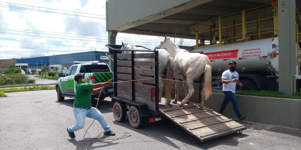 Ação na Via Parafuso recolhe animais na rodovia